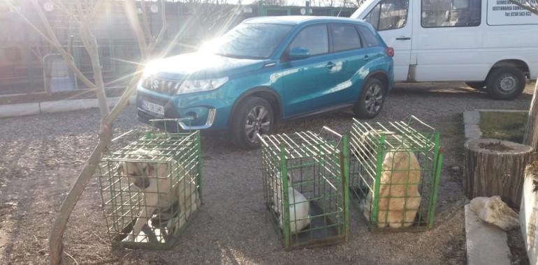Campania de sterilizări gratuite pentru câini s-a desfășurat în condiții foarte bune!